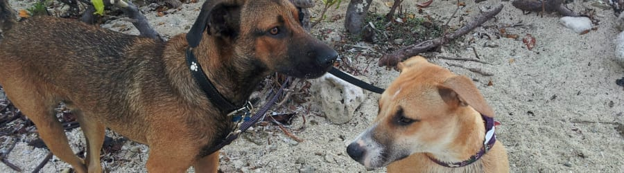 honden in curacao