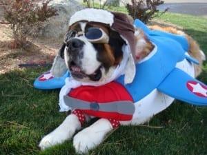 hond vliegtuig - honden in curacao