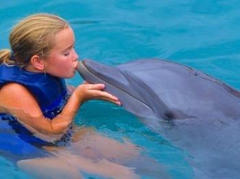 zwemmen met dolfijnen op Curacao