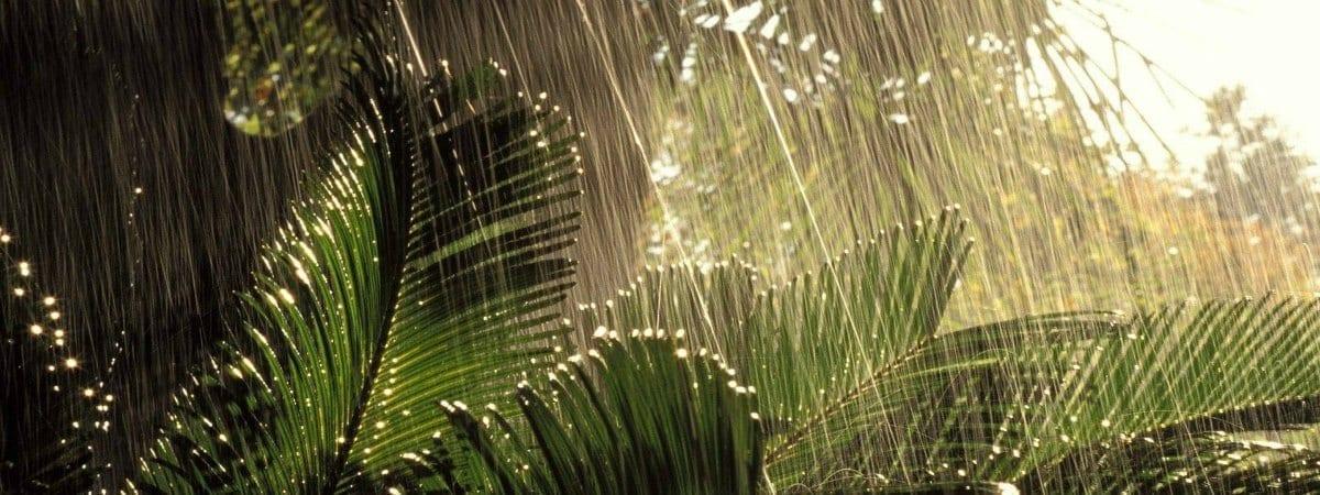 regen op curacao regenseizoen