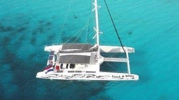 Blue Finn Black White Klein Curacao