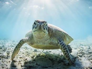 zeeschildpad Klein Curacao