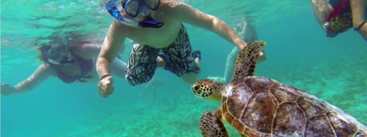 Klein Curacao zwemmen met schildpadden