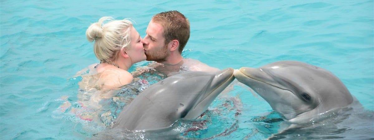 dolfijnen op curacao zie je bij de dolphin academy