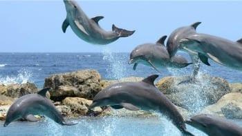 Dolfijnen op Curaçao