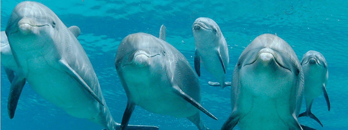 Dolfijnen Curaçao - Dolphin Academy: ontmoet dolfijnen!
