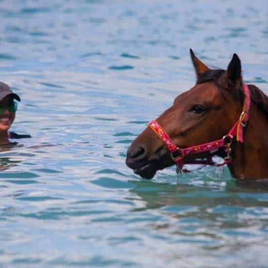 paardrijden op curacao 1200x630