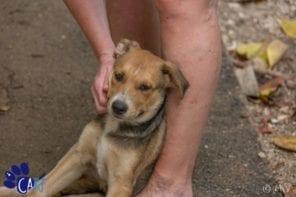 Zwerfhonden en puppies knuffelen op Curaçao