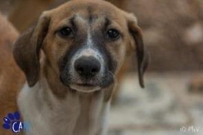 Straathonden en puppies knuffelen op Curaçao