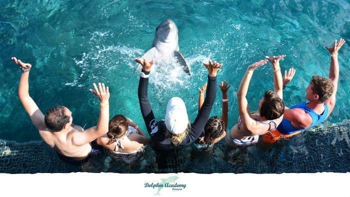 dolfijnen curacao encounter dolphin academy