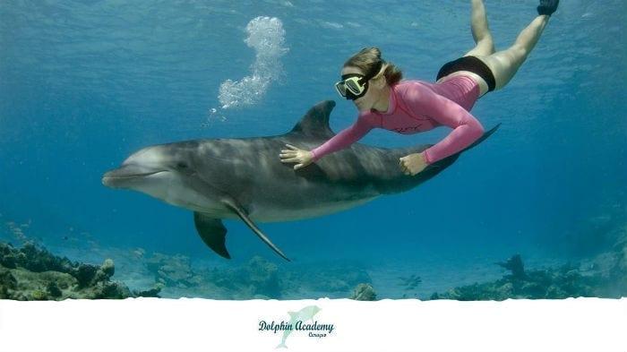 dolfijnen snorkelen curacao