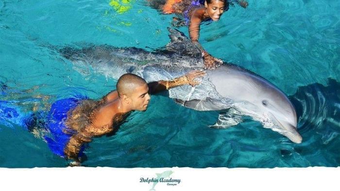 dolfijnen zwemmen curacao