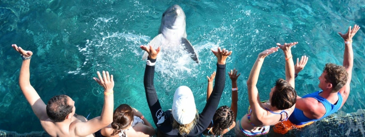 Dolphin Encounter Curaçao