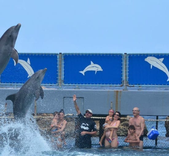 Dolphin encounter curacao