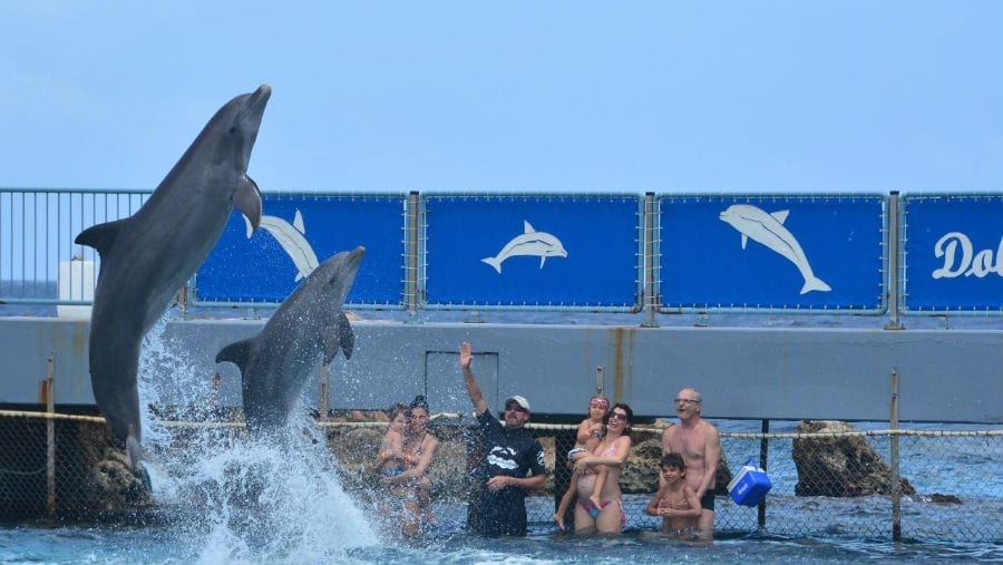Dolphin encounter curacao