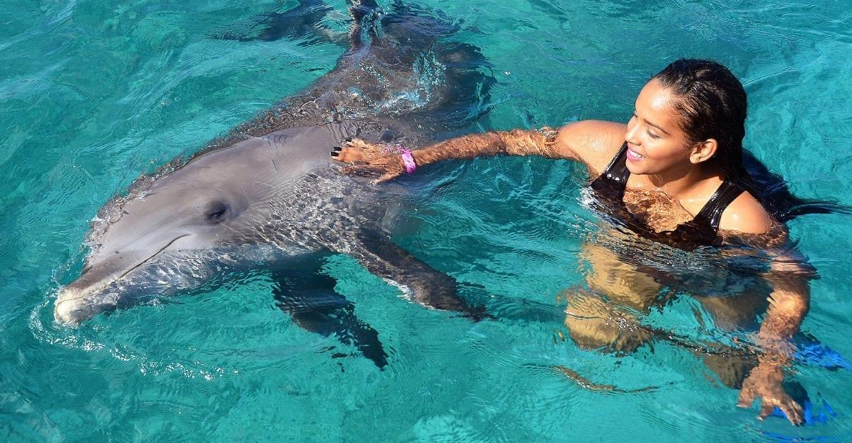 Goedkoop zwemmen met dolfijnen op Curaçao