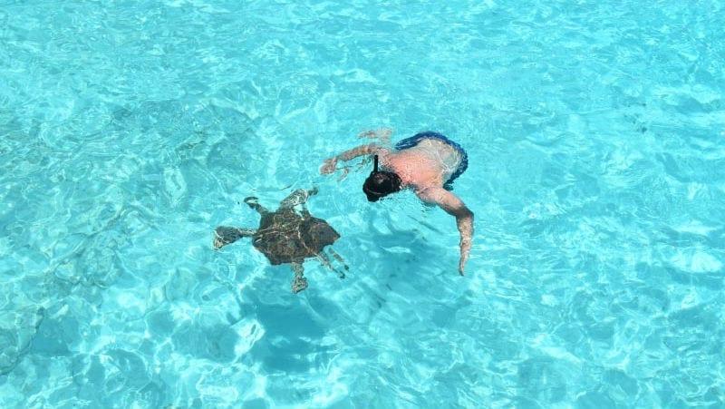 Klein Curaçao zeeschildpad