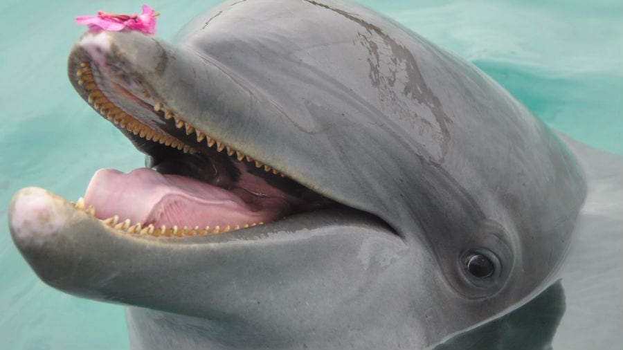 dolphin encounter curacao dolfijn GeeGeeq
