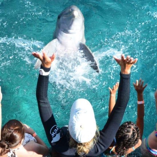 Dolfijnen Curaçao Dolphin Encounter