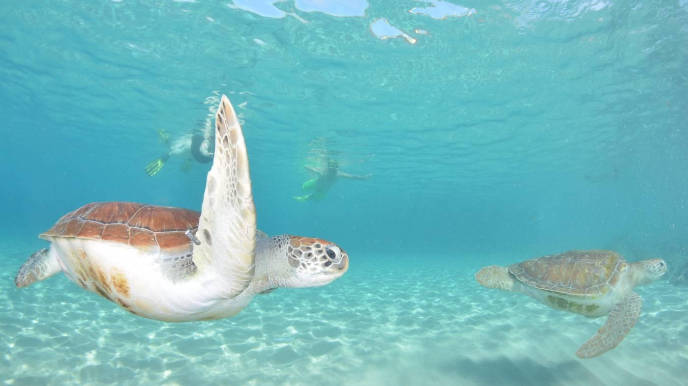 snorkelen curacao schildpadden