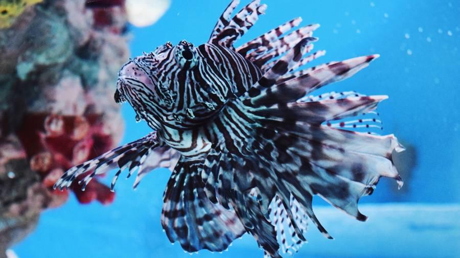 duiken curacao snorkelen lionfish