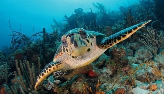 schildpad curacao snorkelen