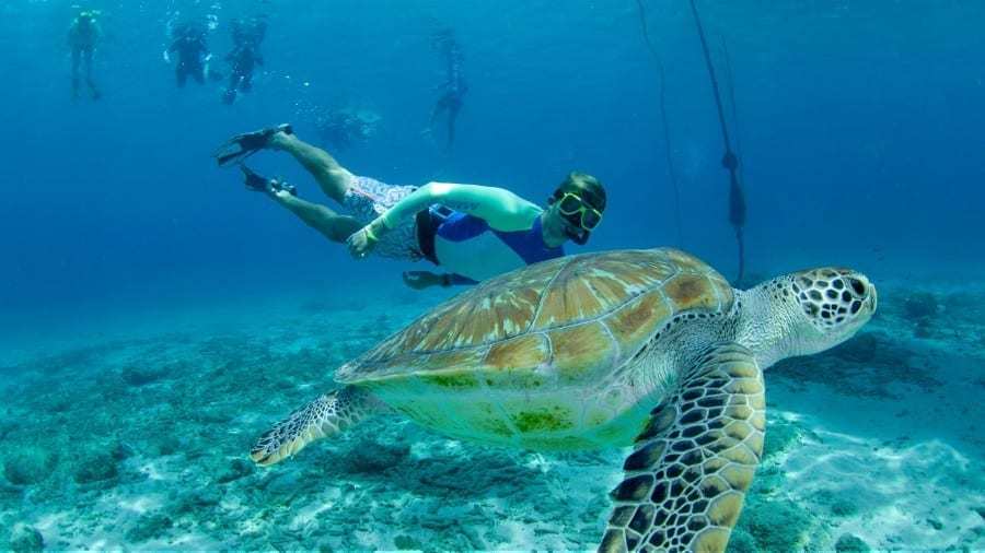 westcoast trip curacao snorkel