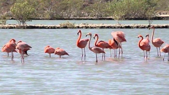 eilandtour curacao Discover Curacao Flamingo