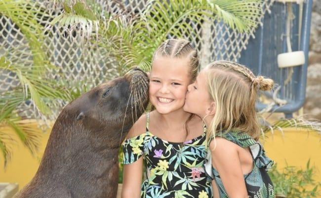 sea aquarium curacao zeeleeuw kus