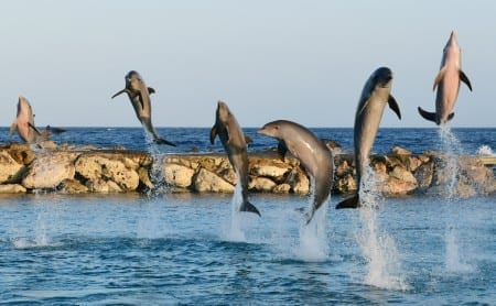 dolfijnen training bij sea aquarium curacao
