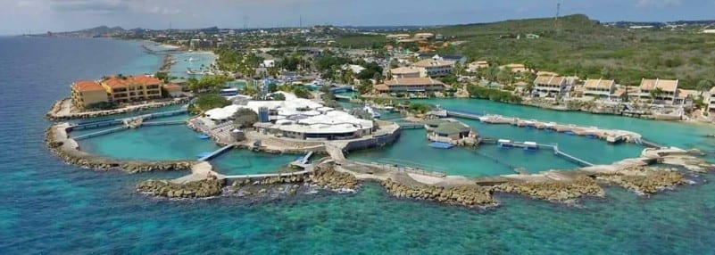 sea aquarium curacao overview turtle and ray 800x286 1