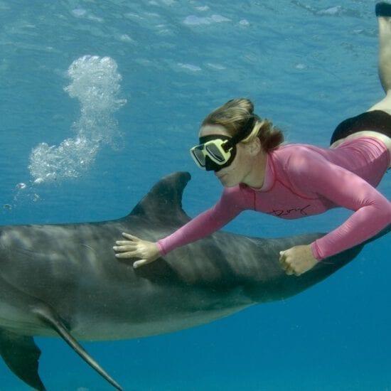 snorkelen met dolfijn op curacao