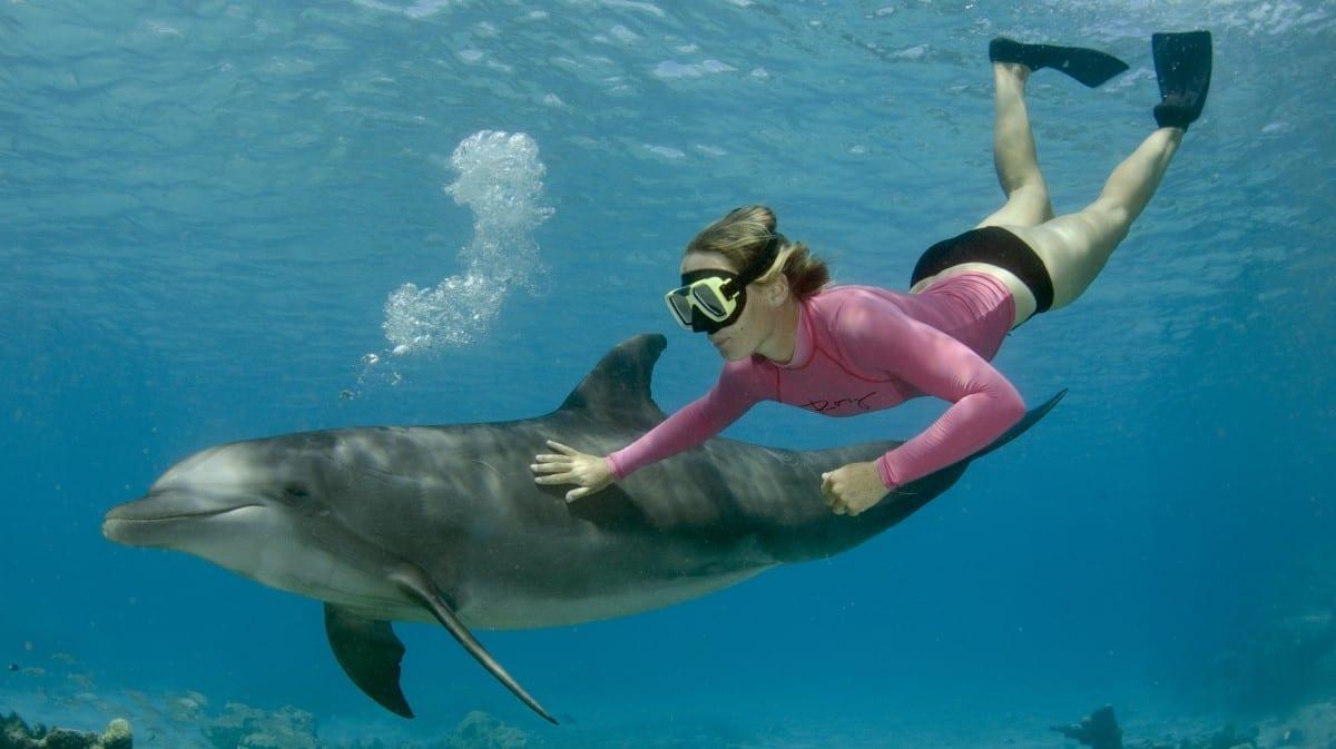 dolphin snorkel curacao dolfijn