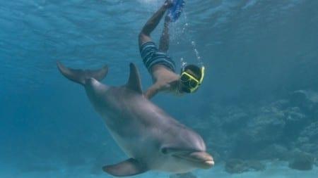 curacao snorkelen dolfijnen