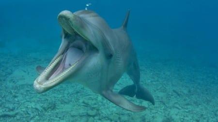 dolphin-tela-curacao