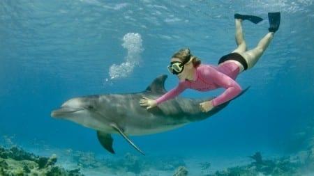 dolfijn snorkelen curacao