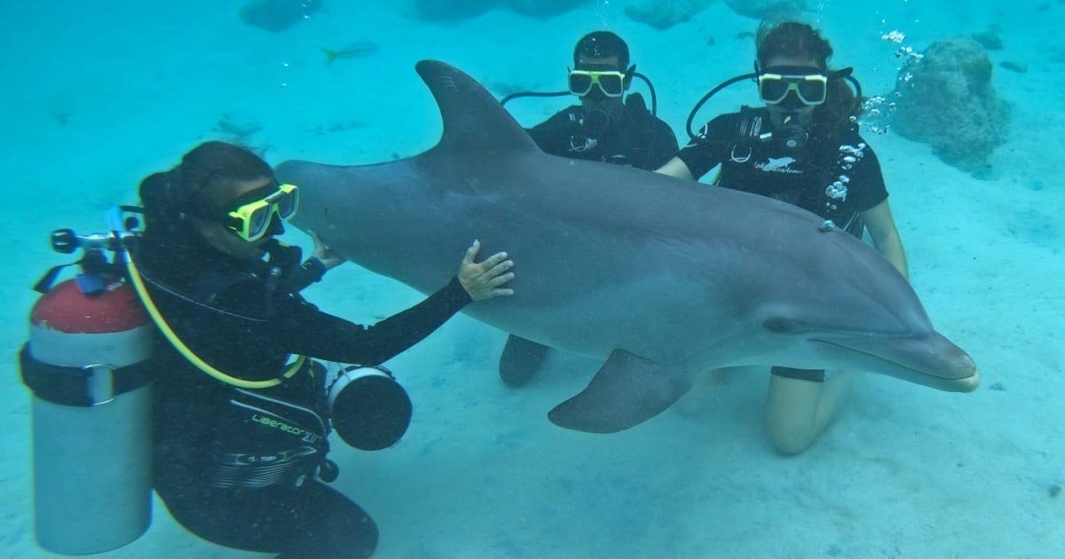 dolfijn duiken curacao dolphin scuba encounter