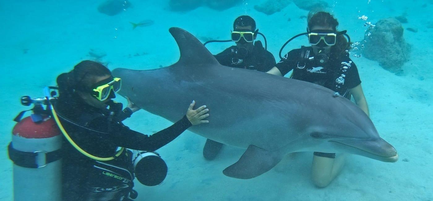 Dolphin Scuba Encounter - duiken met dolfijn