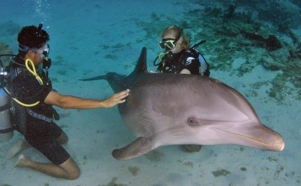 dolfijn duiken curacao scuba encounter