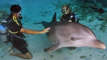dolphin scuba encounter