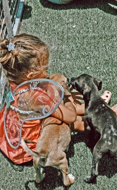 RPC puppie knuffelen 402x650 2