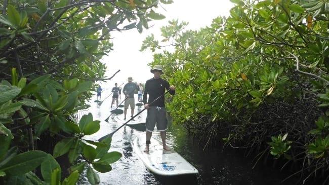 mangrove suppen curacao 650x365 1