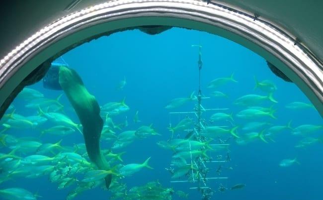 ocean lens curacao